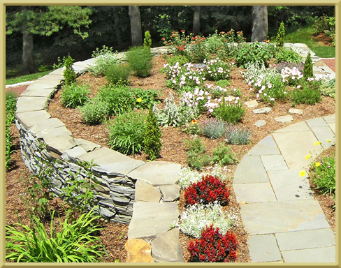 Landscaping plant choices