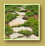 Gorgeous flagstone walkway grows thyme and irish moss in the cracks